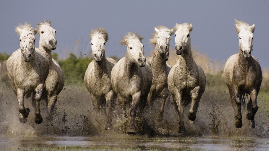 animals France horses Southern wallpaper