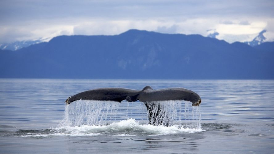 tails mountains whales sea wallpaper