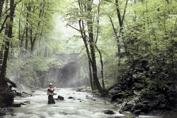 FISHING fish sport water fishes river forest mist mood wallpaper