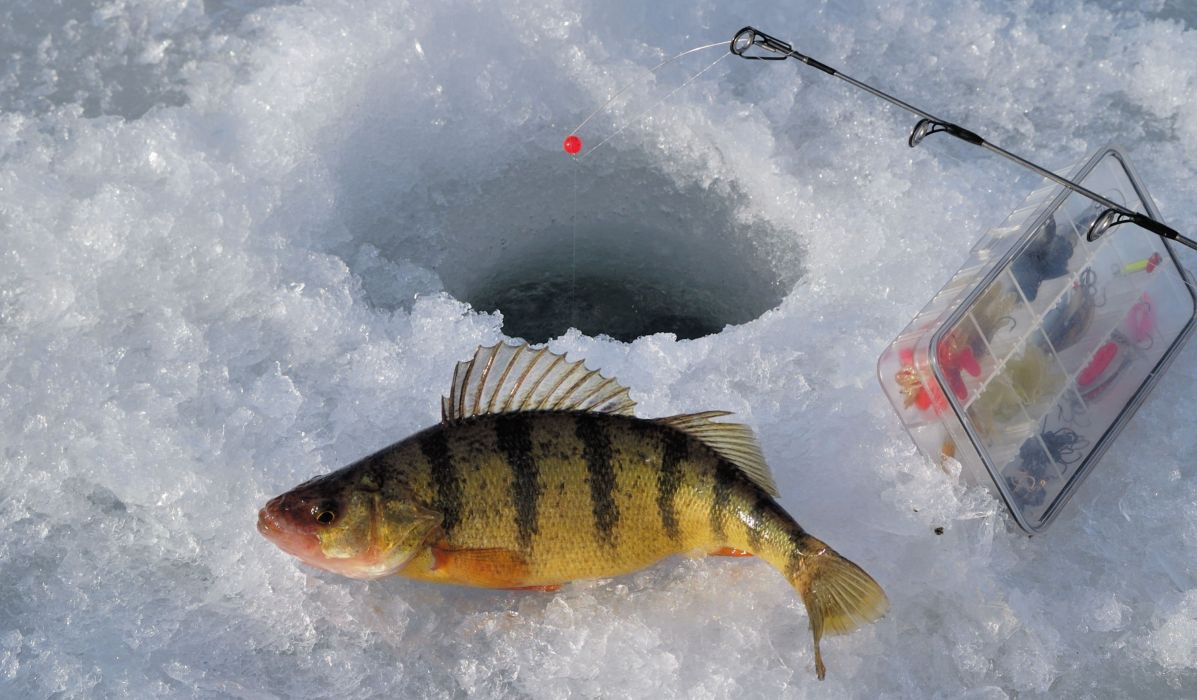 FISHING fish sport water fishes ice winter wallpaper