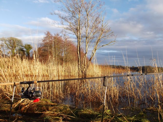 FISHING fish sport water fishes lake autumn river grass wallpaper