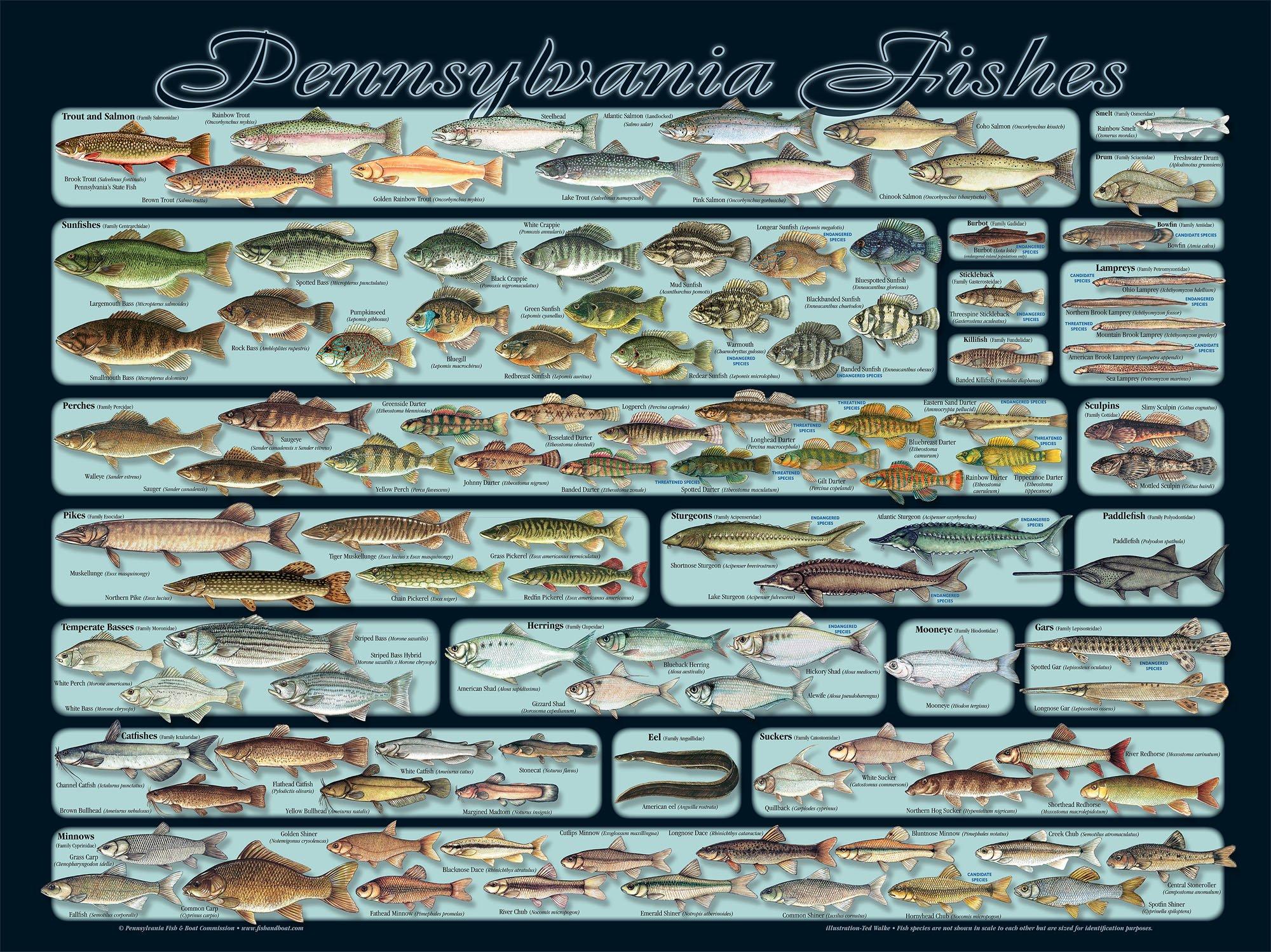 Fishing fish sport water fishes poster wallpaper for How much is a fishing license in pa