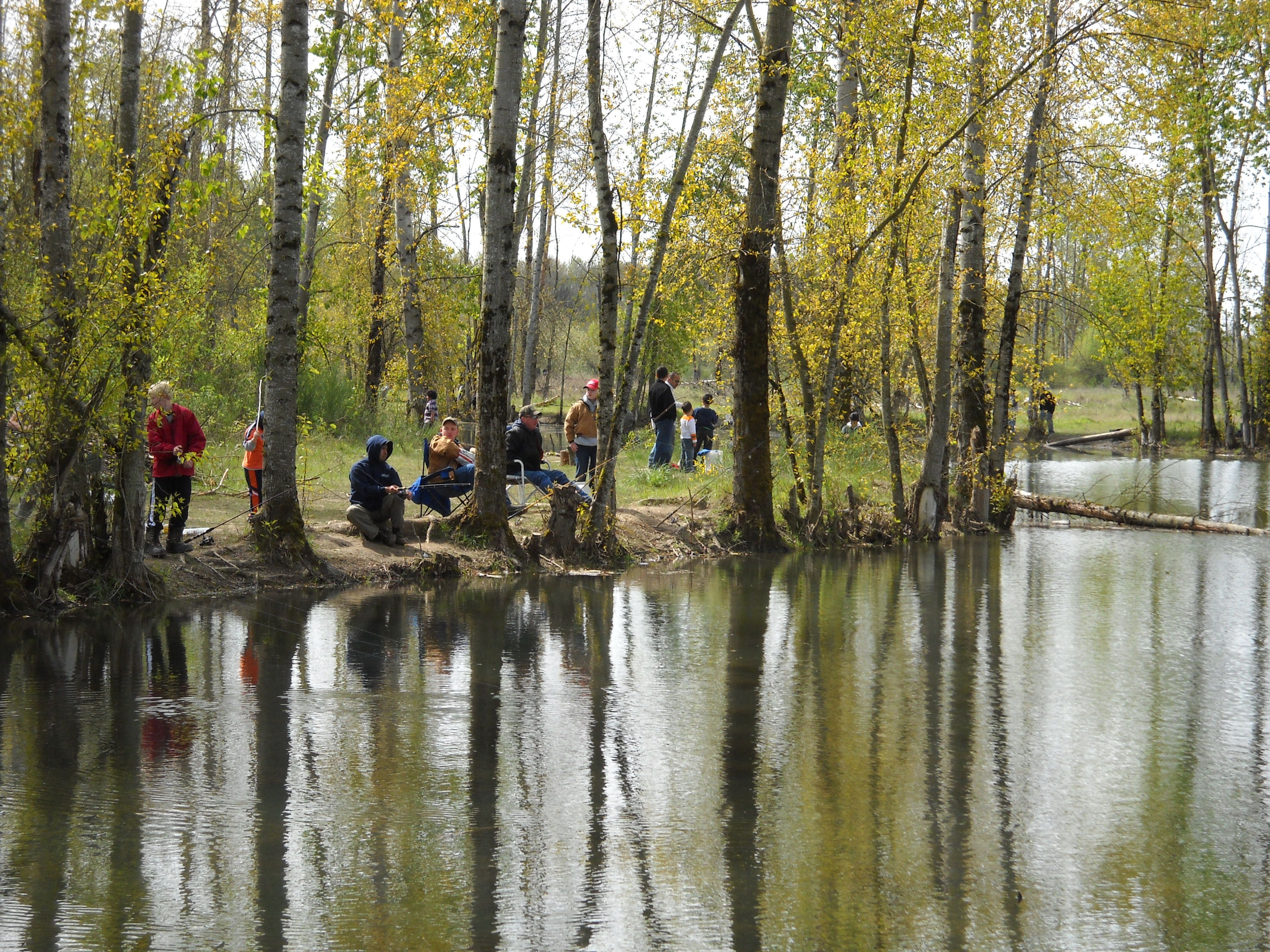 Fishing Fish Sport Water Fishes River Lake Autumn Forest