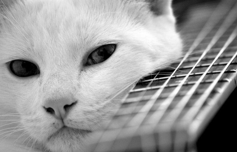 cat guitar mood look cats pov wallpaper
