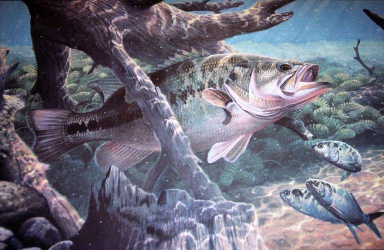 FISHING fish sport water fishes underwater lake river artwork bass wallpaper