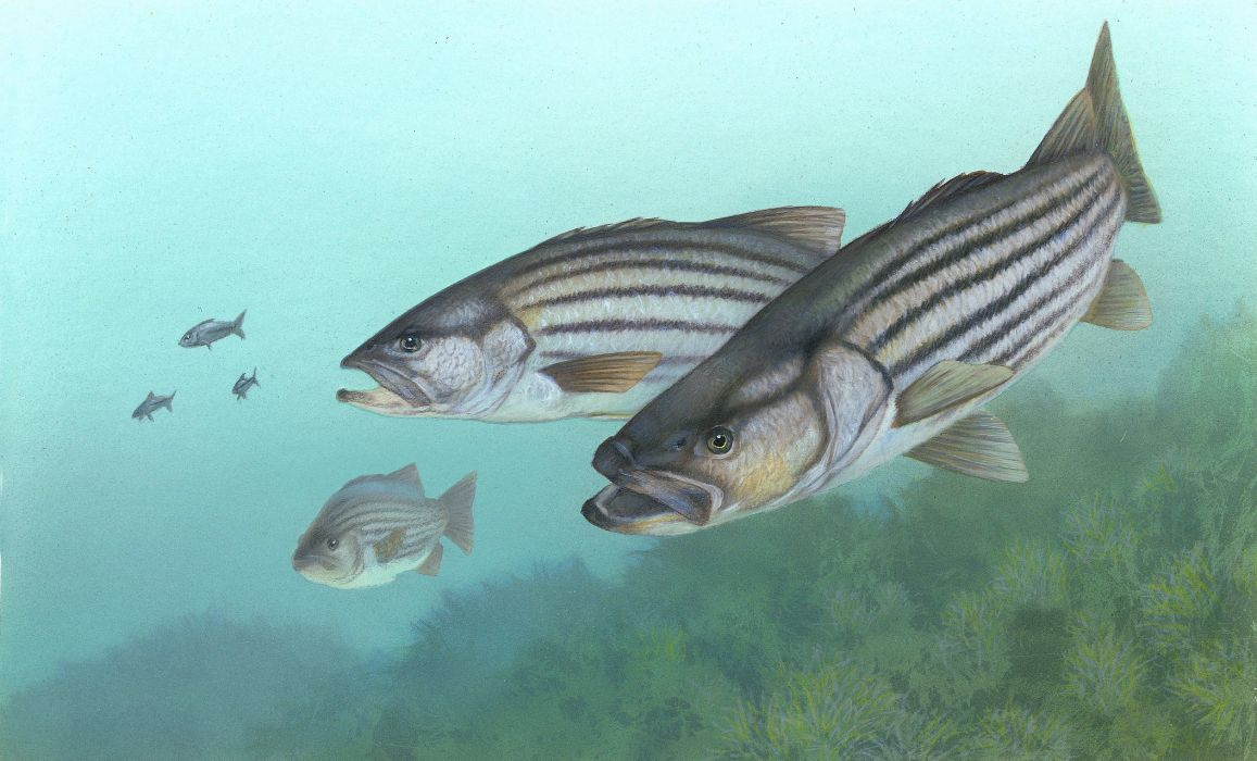 FISHING fish sport water fishes underwater lake river artwork wallpaper