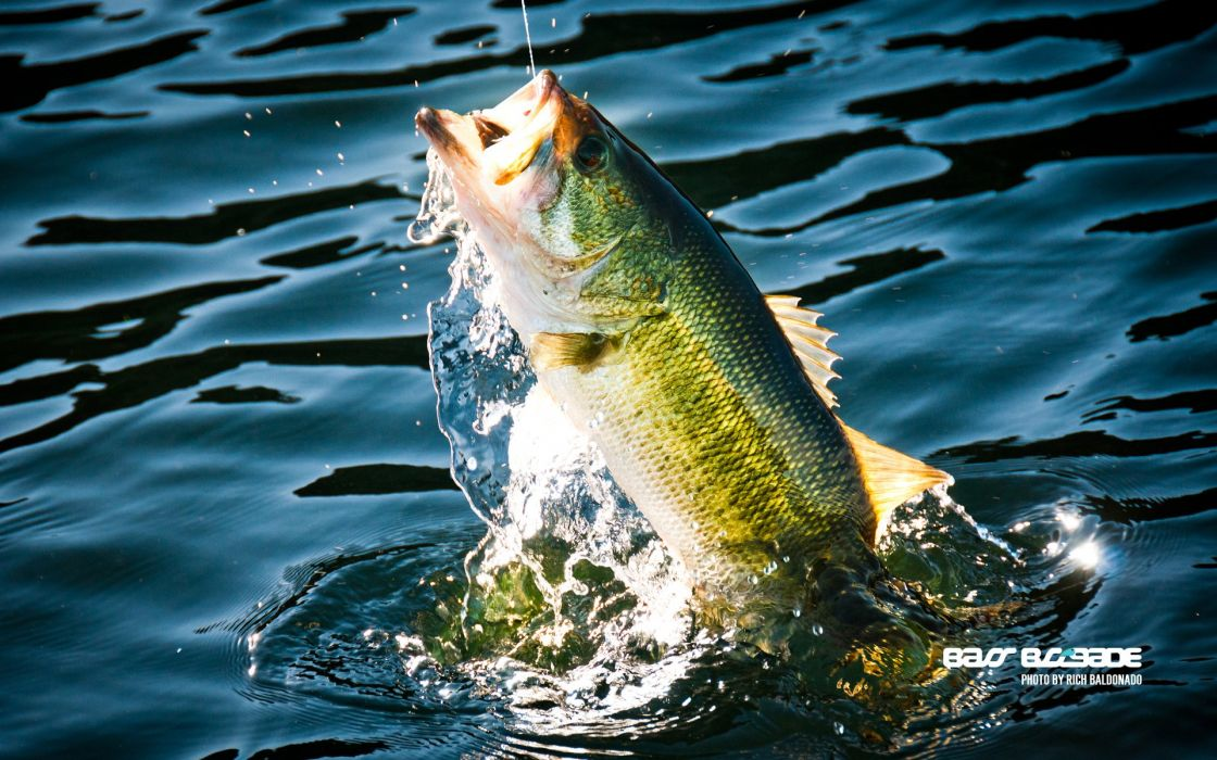 Fishing Fish Sport Water Fishes Lake River Bass Wallpaper 1920x1200 324645 Wallpaperup