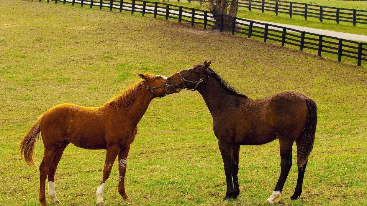 horses wallpaper