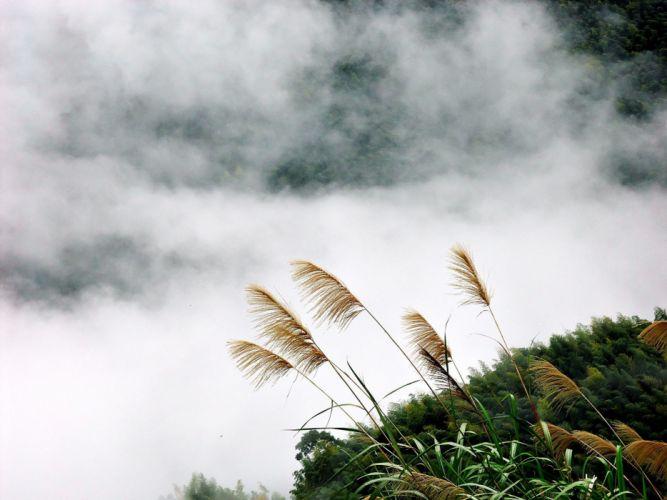 landscapes nature fog plants wallpaper