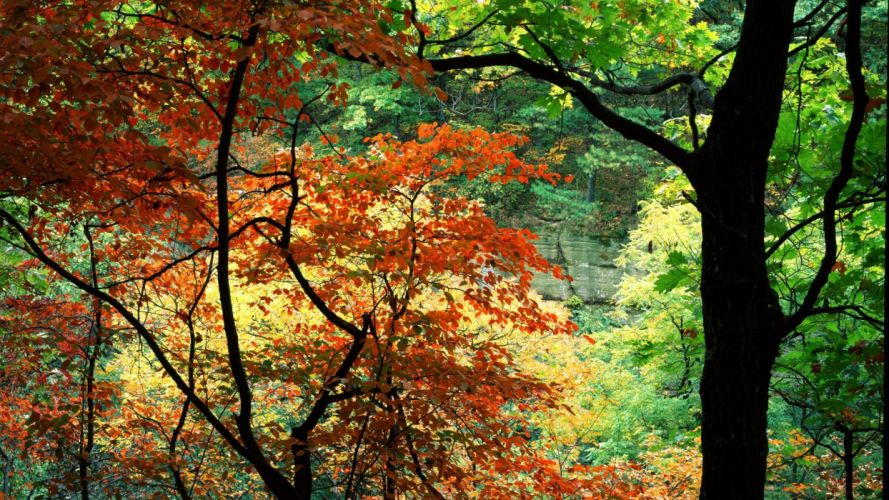 nature trees rocks canyon Illinois wallpaper