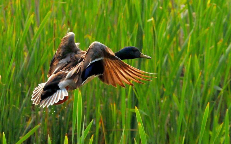 nature birds wildlife wallpaper