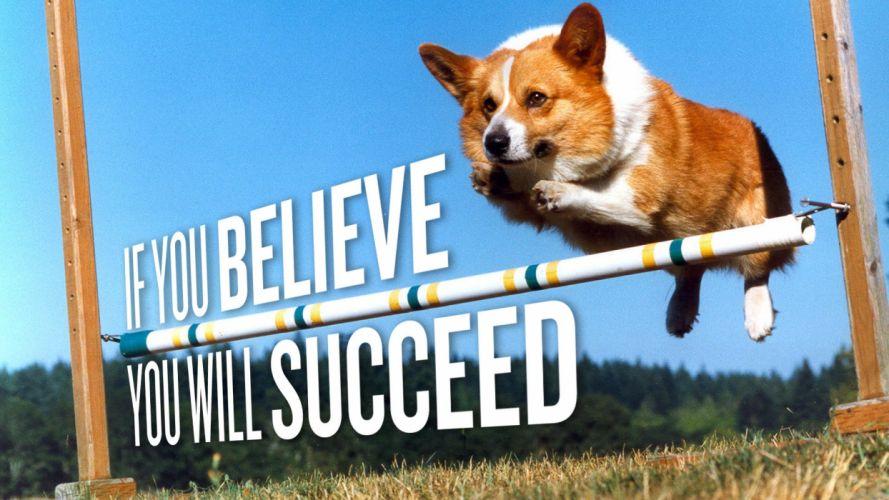 animals dogs Corgi motivation wallpaper