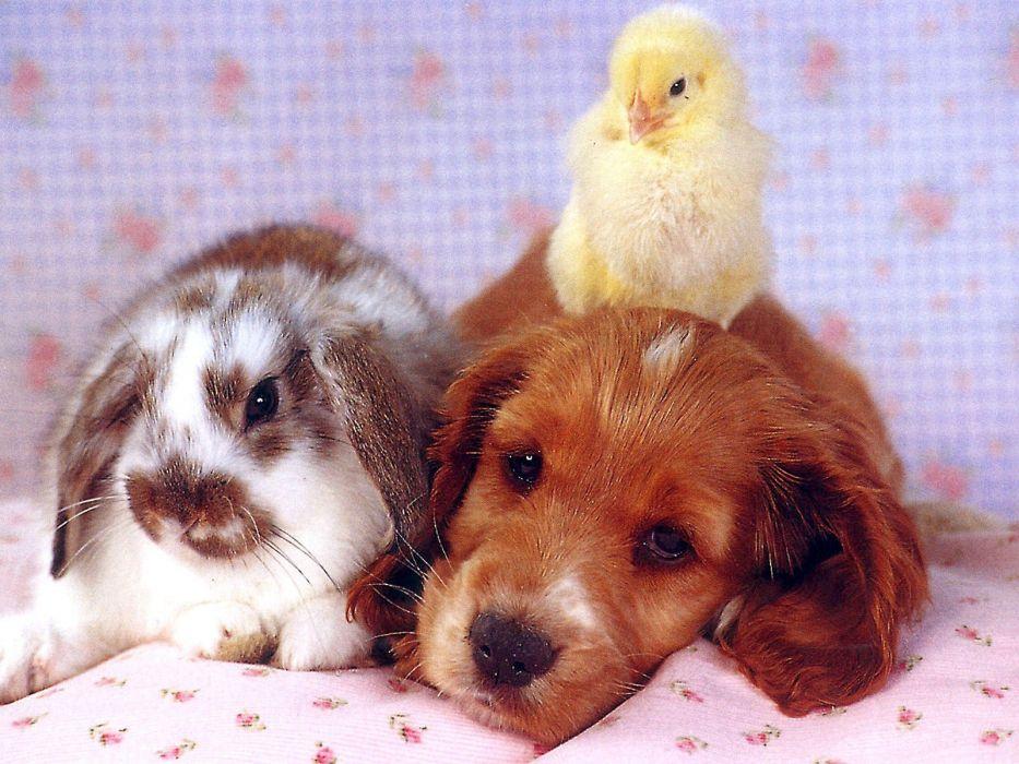Bunnies Animals Puppies Baby Young Rabbits Birds Wallpaper