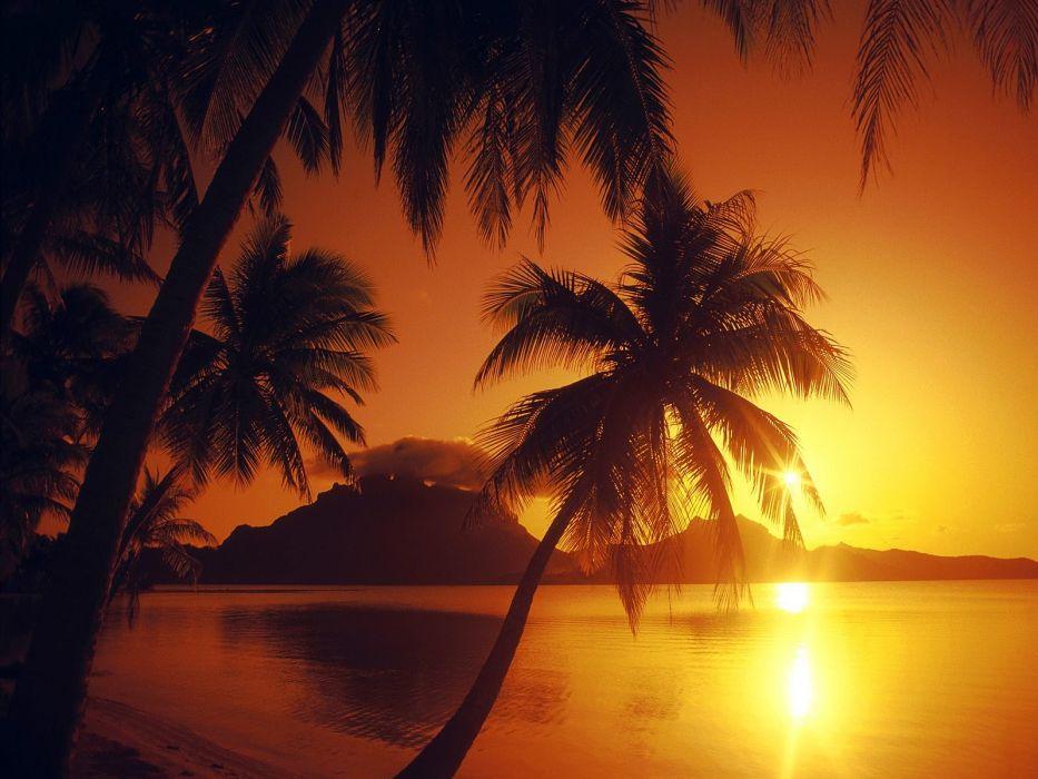 water sunset shore palm trees beaches wallpaper