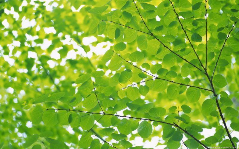 green nature leaves depth of field wallpaper