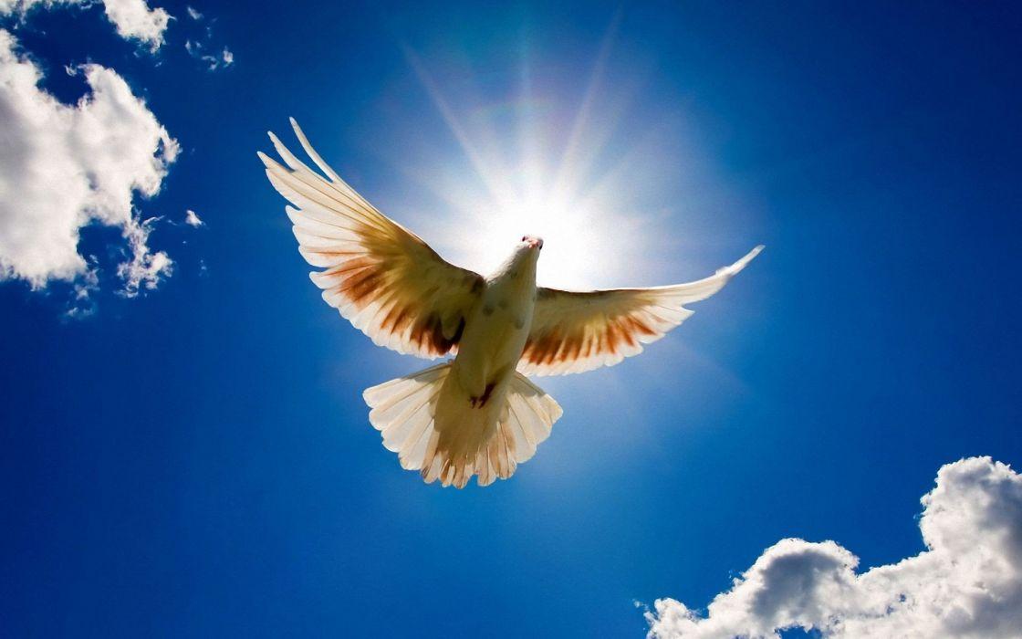 nature flying doves wallpaper