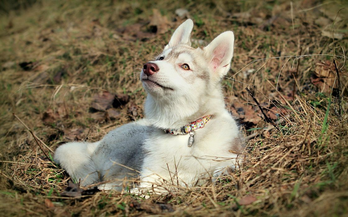 nature animals dogs outdoors pets wallpaper