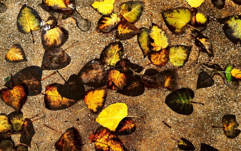 autumn leaves ground wallpaper