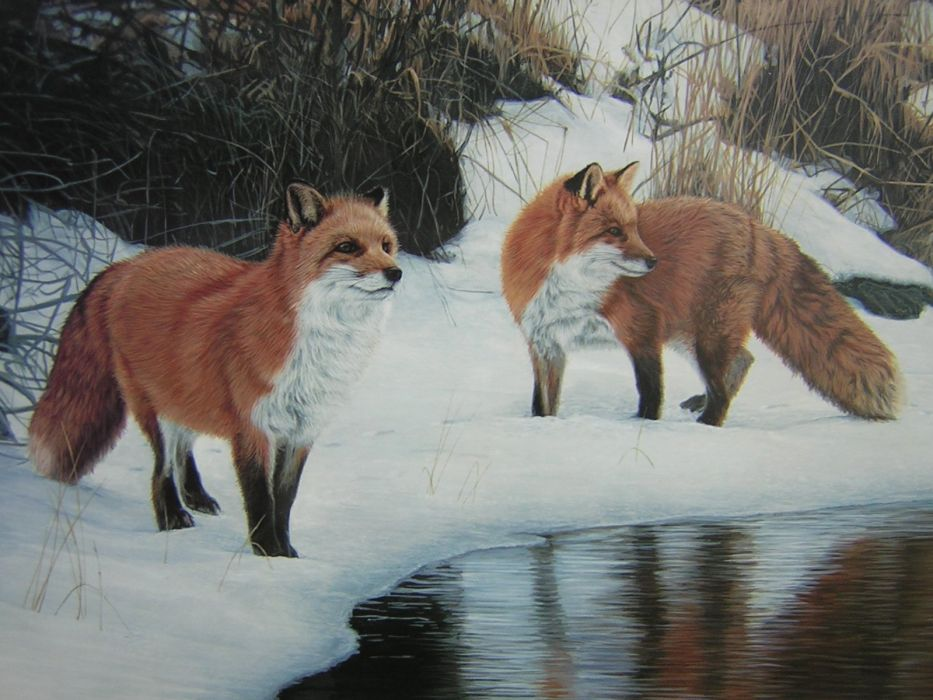 paintings foxes wallpaper