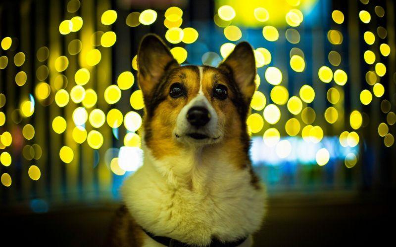 lights animals dogs bokeh wallpaper