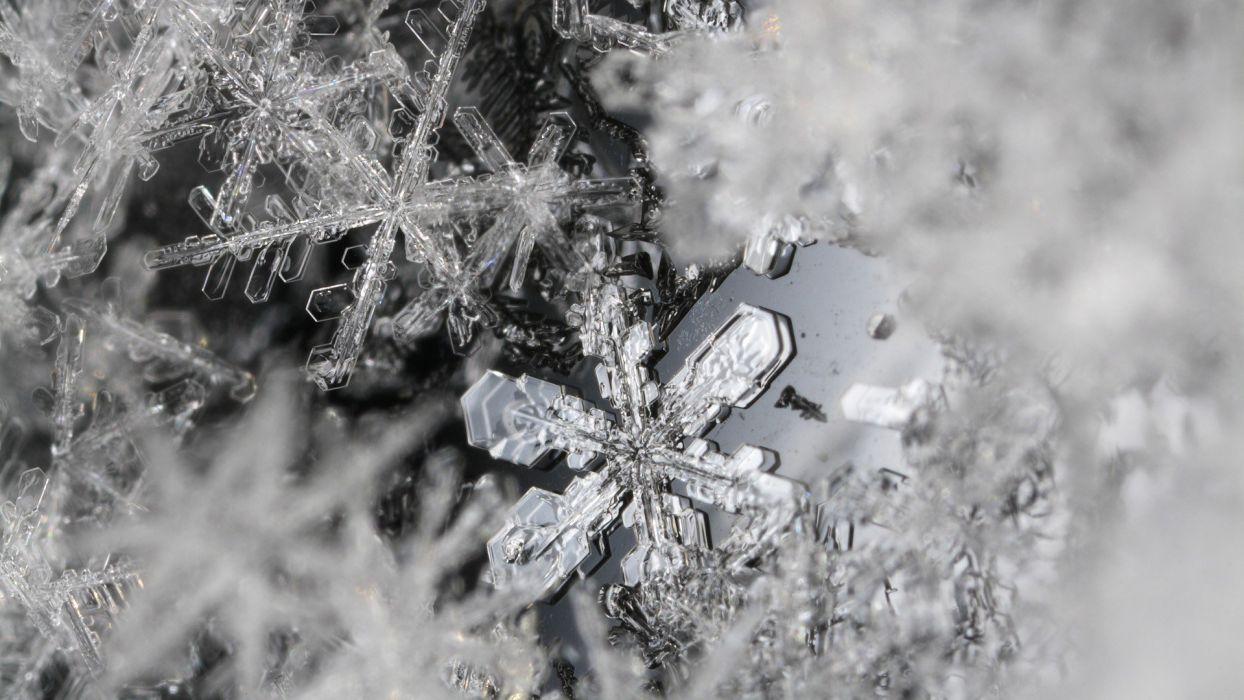 snow snowflakes monochrome wallpaper