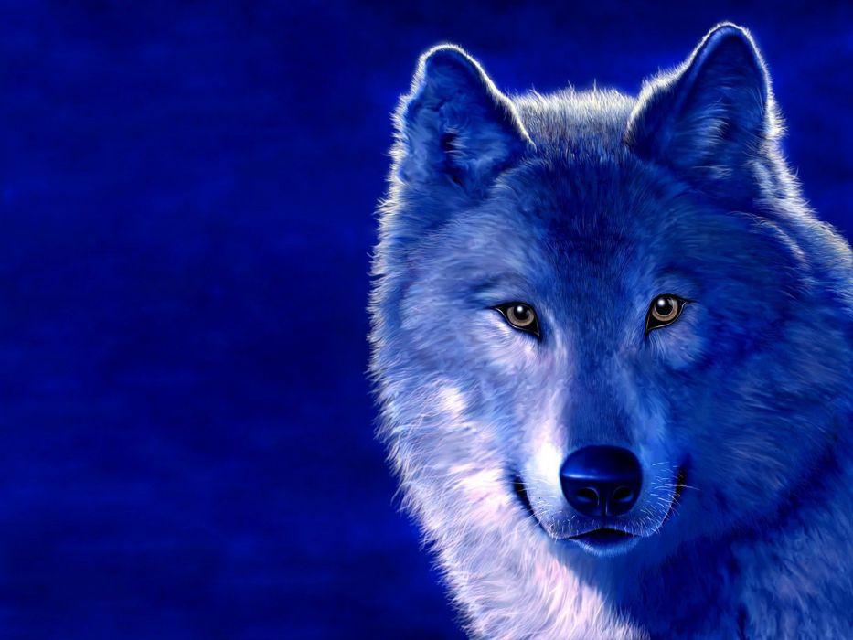 blue animals digital art wolves wallpaper
