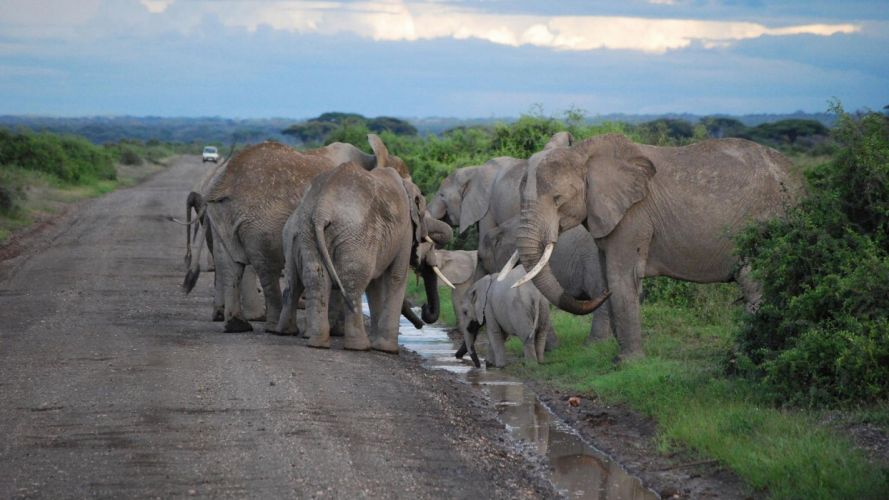 nature animals roads elephants baby elephant baby animals wallpaper