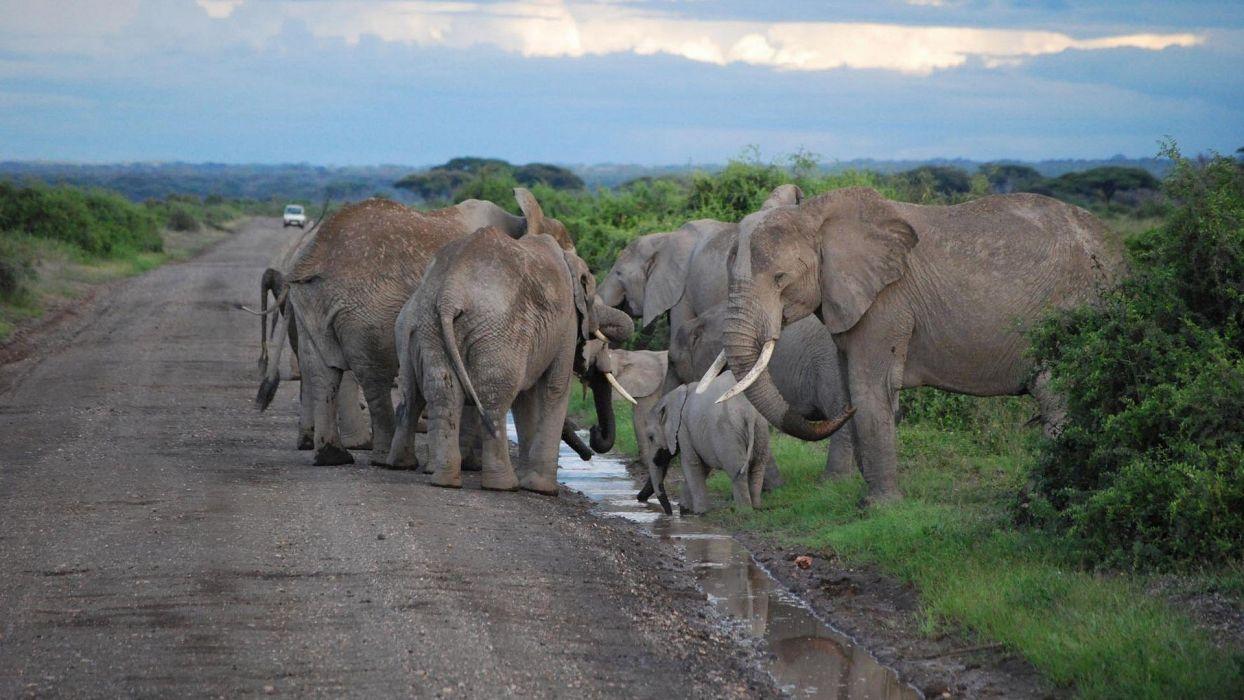 nature animals roads elephants baby elephant baby animals wallpaper
