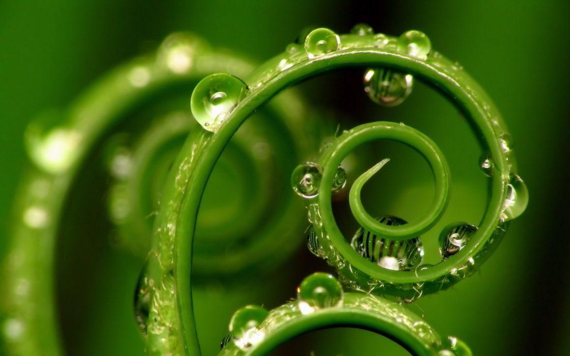 green nature water drops macro wallpaper