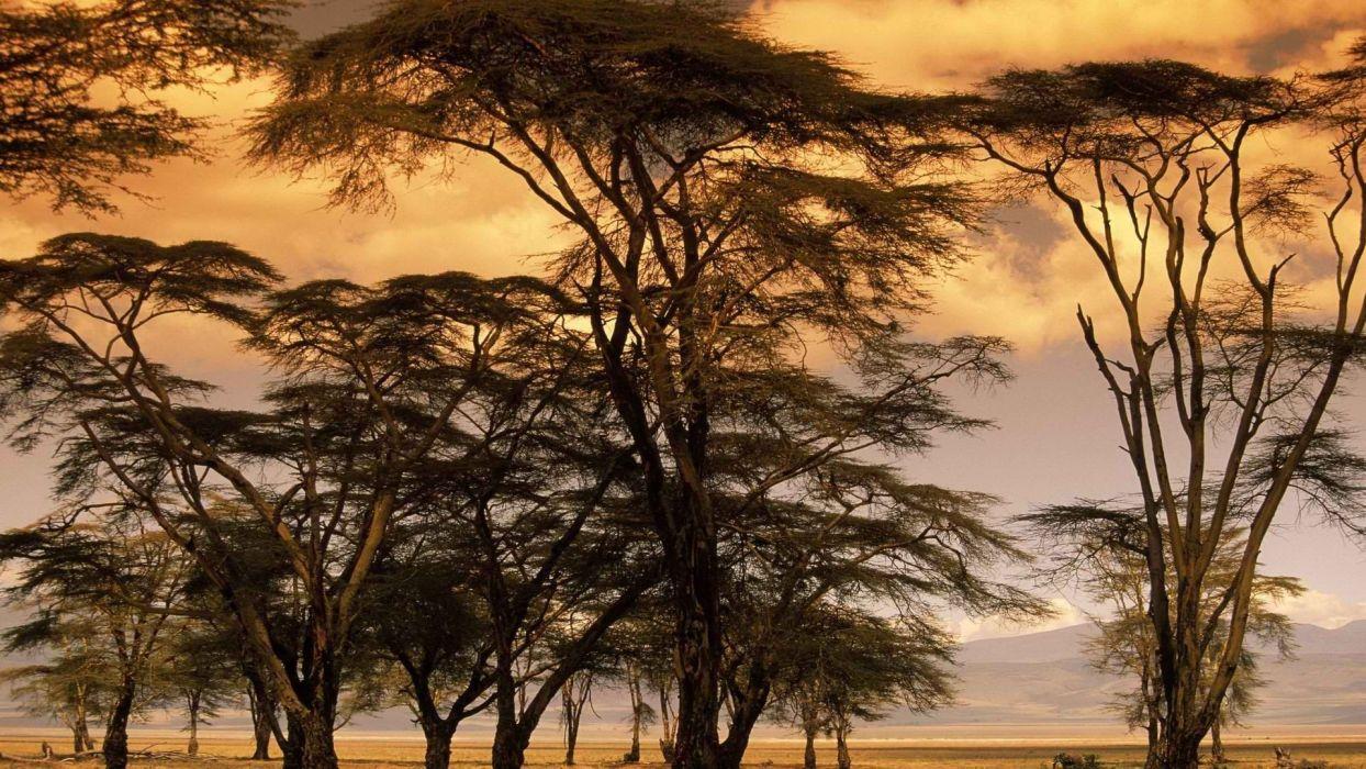 sunset trees Africa wallpaper