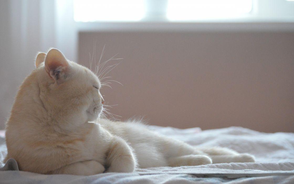 cats beds wallpaper