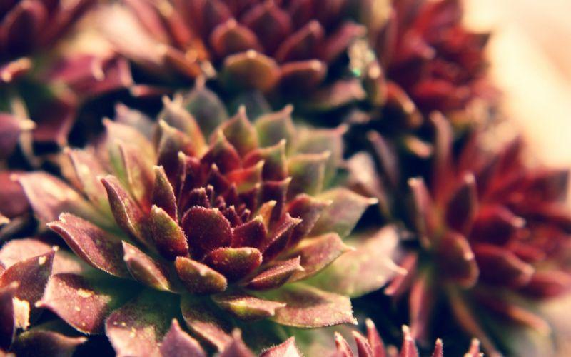 nature macro wallpaper