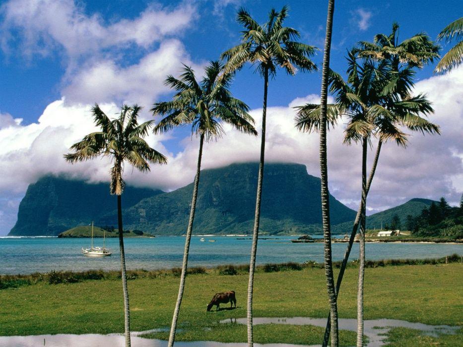 landscapes nature palm trees wallpaper
