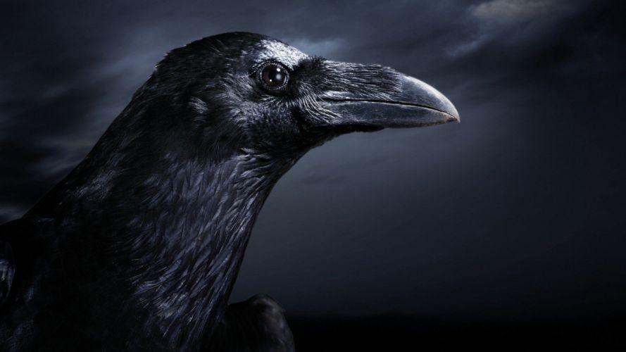 black dark birds ravens wallpaper