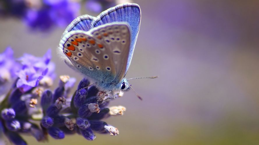close-up insects butterflies wallpaper