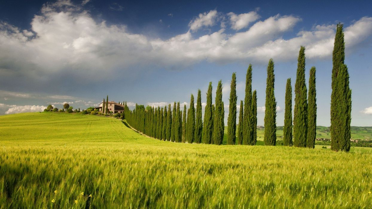 green landscapes nature fields spring Italy tree house sky Campania cypress tree wallpaper