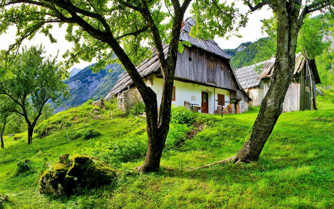 trees grass houses wallpaper