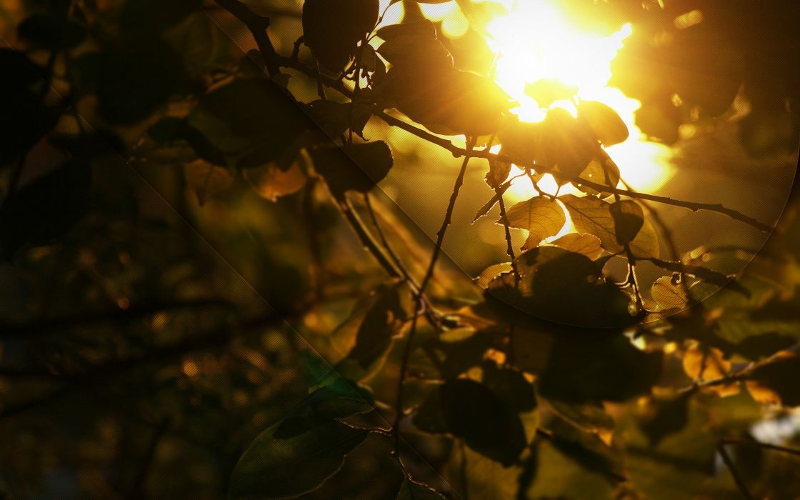 nature leaves golden sunlight wallpaper