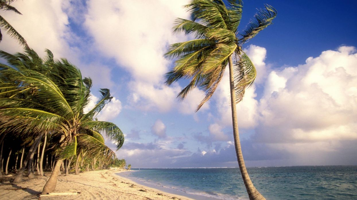 clouds palm trees beaches wallpaper