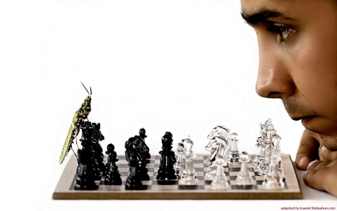 insects chess men funny Bug chess pieces wallpaper