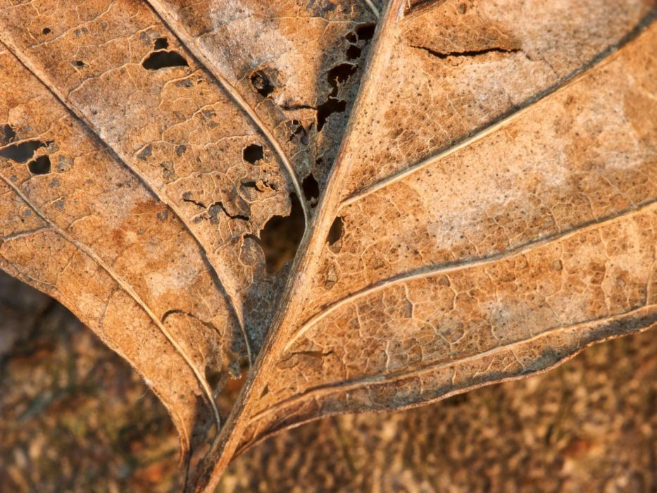 close-up leaf leaves plants macro wallpaper
