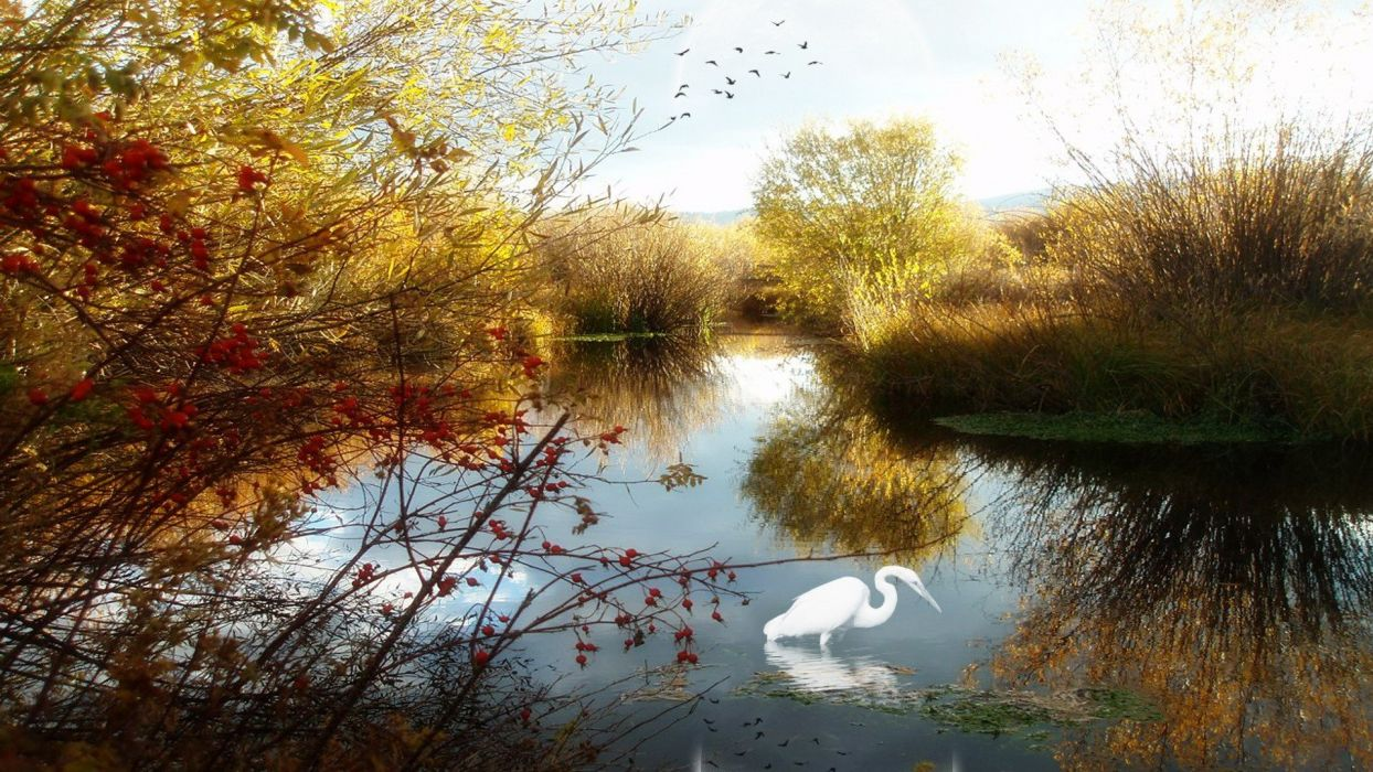 water landscapes birds lakes wallpaper