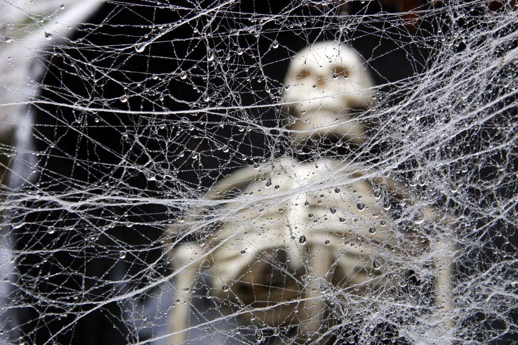 Halloween Skeleton Wallpaper.Dark Horror Halloween Skeleton Skull Wallpaper 2400x1600