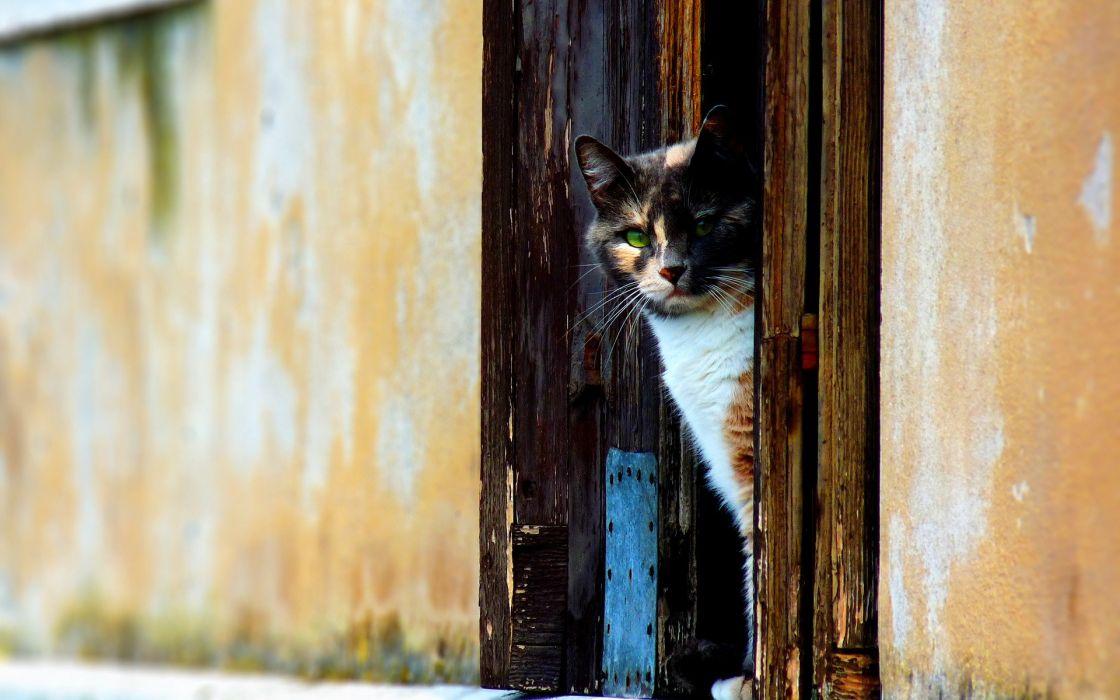 cats animals doors wallpaper