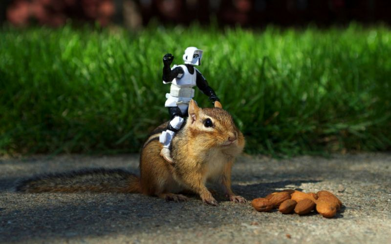 stormtroopers animals grass outdoors nuts chipmunks wallpaper