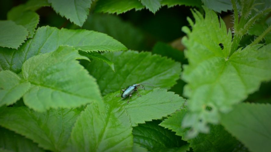 green nature insects wallpaper