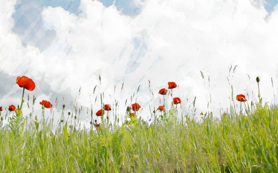 fields artwork poppy wallpaper