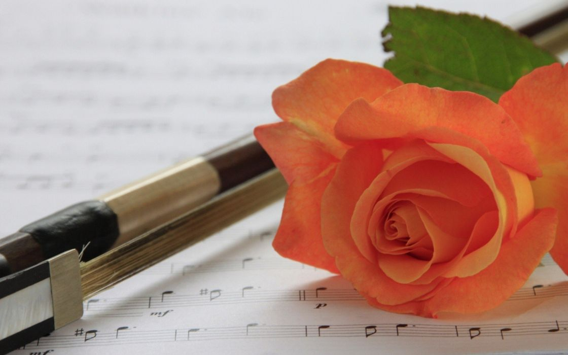 flowers pens roses musical notes wallpaper