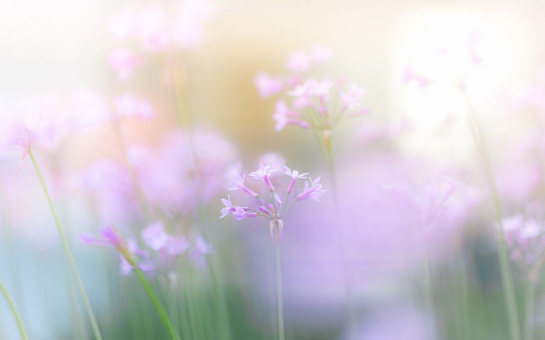 light nature flowers pink wallpaper