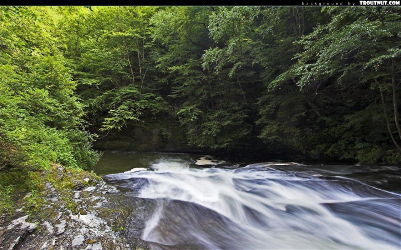 nature forests streams wallpaper